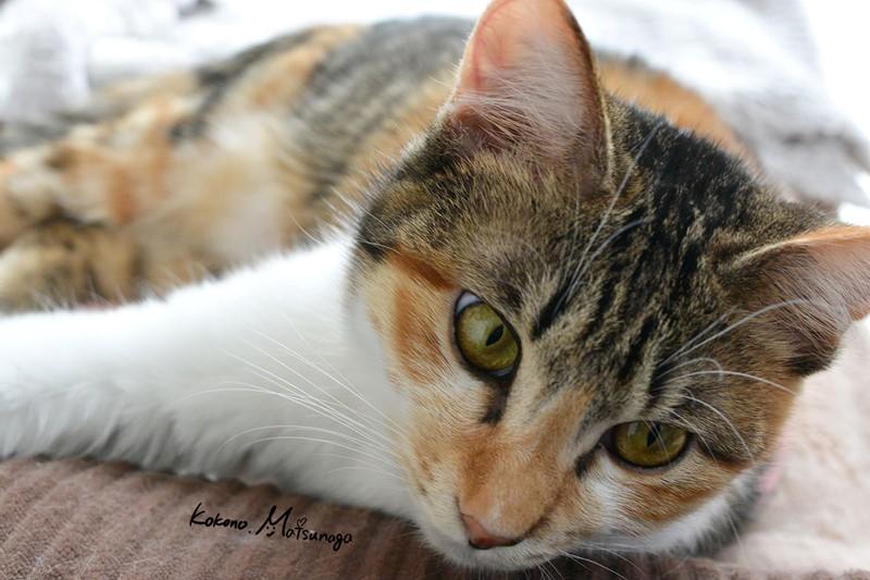 猫の日らむ