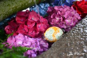 手洗い場の紫陽花